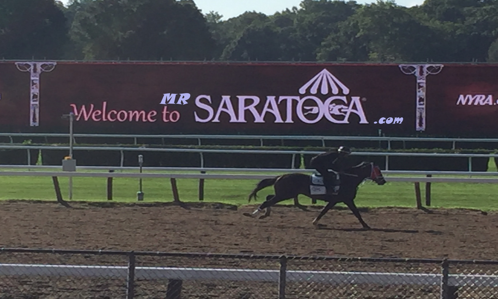Mr Saratoga